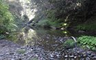 Creek Trail, San Mateo County