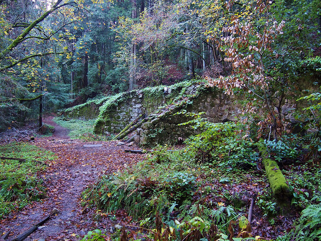 Saturday, February 25, 2017 (Cancelled) – Fall Creek Unit, Henry Cowell Redwoods State Park